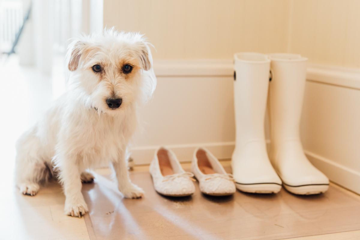 Hochzeitsfoto der Brautschuhe mit Hund.
